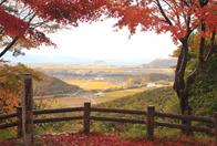 紅葉美しい近江孤篷庵と観音の里を巡る