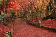 紅葉の奥びわこ、隠れた名所を満喫