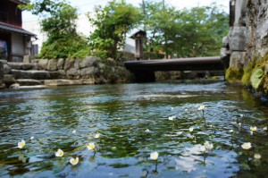 Jizo-Gawa River(water crowfoot)