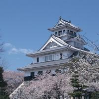長浜城と桜