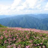 山頂のお花畑(シモツケソウ)