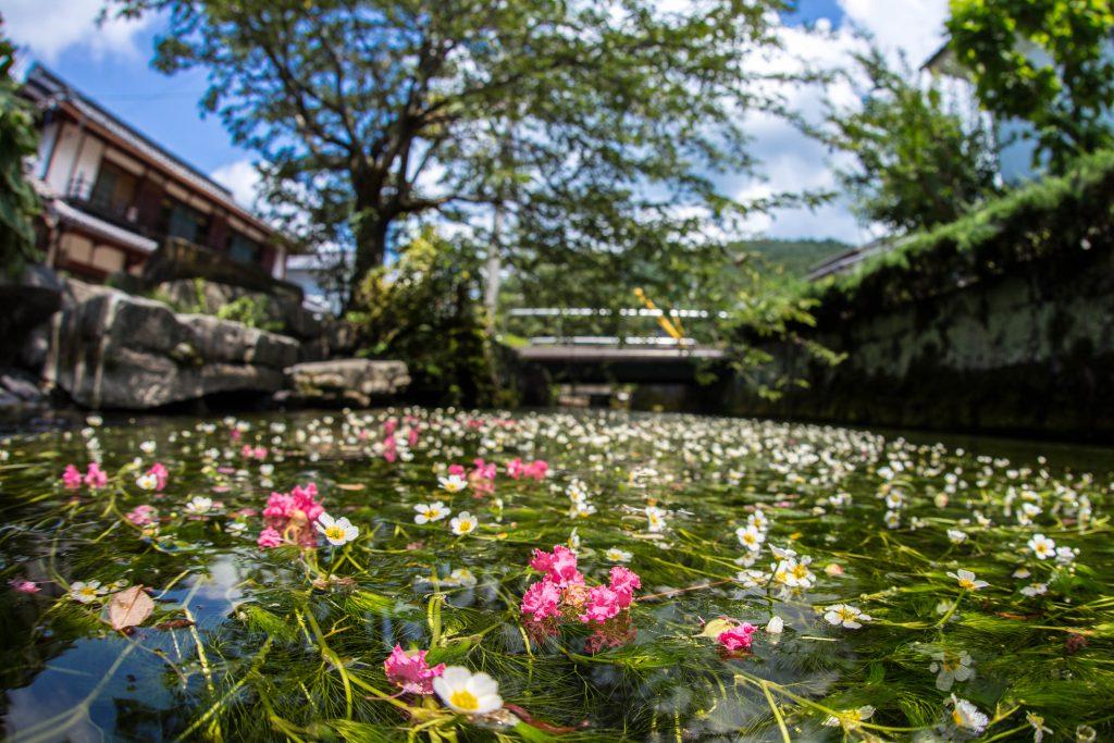 사메가이슈쿠(醒ヶ井宿)